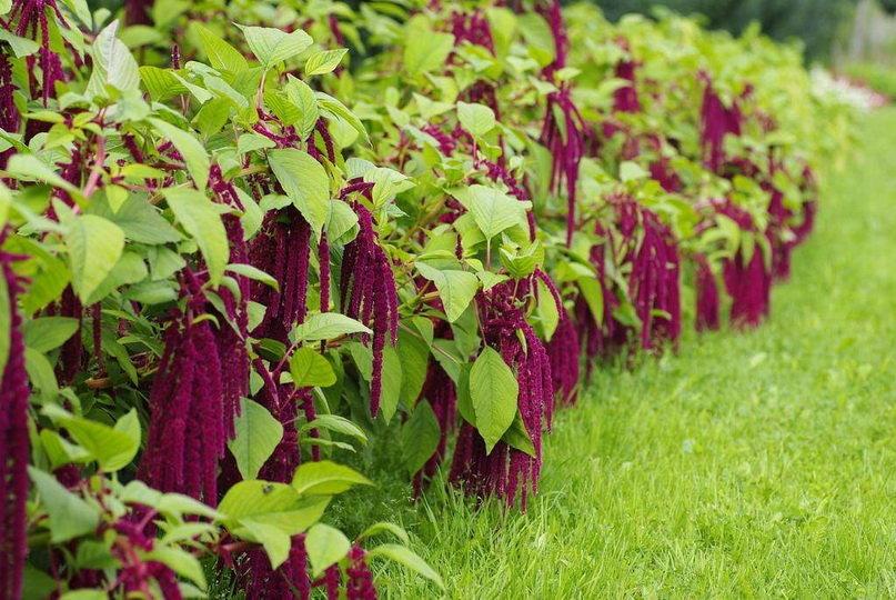 Jakie rośliny nadają się do nawożenia gleby?