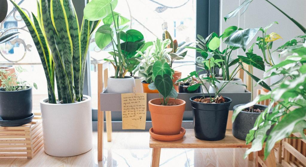 oczyszczanie powietrza w mieszkaniu, jak oczyszczać powietrze w pomieszczeniu, jak dezynfekować pomieszczenie, kwiaty w pomieszczeniach, rośliny domowe do oczyszczania powietrza, rośliny zwiększające odporność, rośliny przeciwbakteryjne, najlepsze kwiaty domowe do oczyszczania powietrza, fitoncydy.