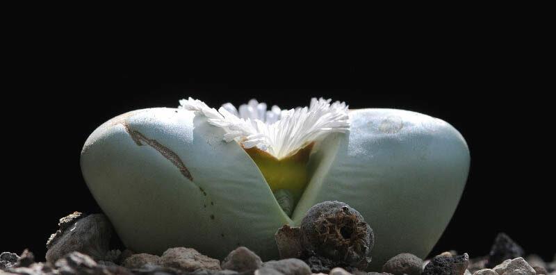 Kwiat.