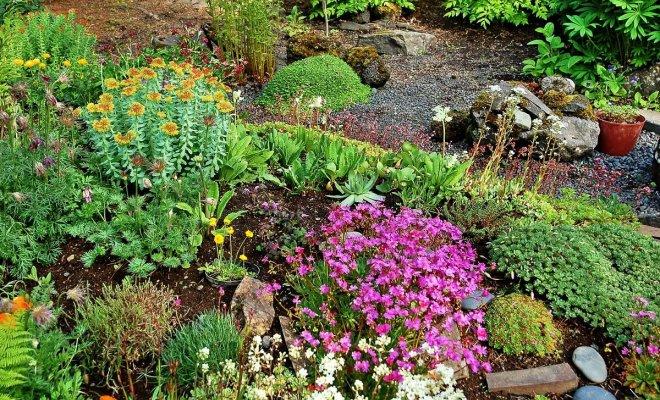 : Rośliny skaliste kwitnące od wiosny do jesieni