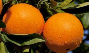 Zawartość kalorii w pomarańczy, użyteczne właściwości