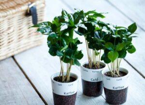 Top 10 roślin domowych z pozytywną energią